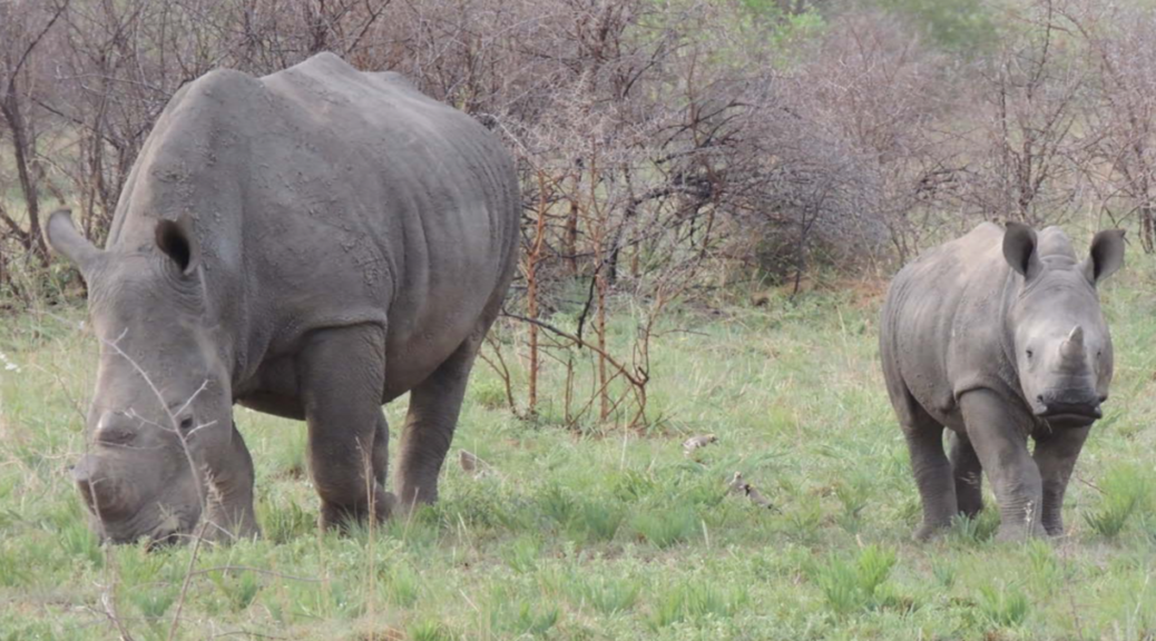 Mana Rhino